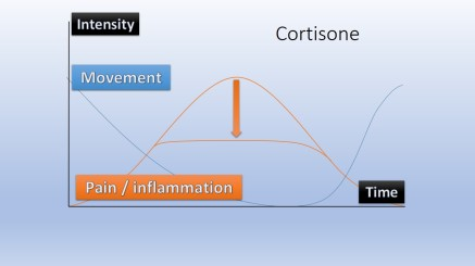 Cortisone effect chart