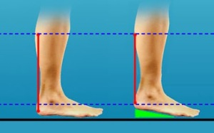 heel lift illustrated  copy